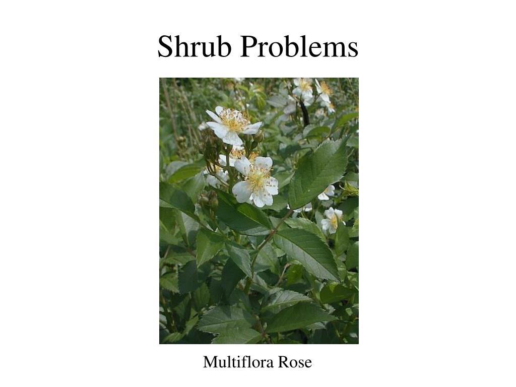 Shrub Problems
