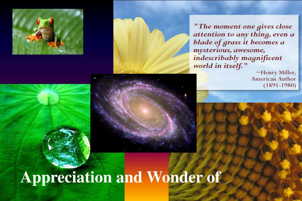 Appreciation and Wonder of
