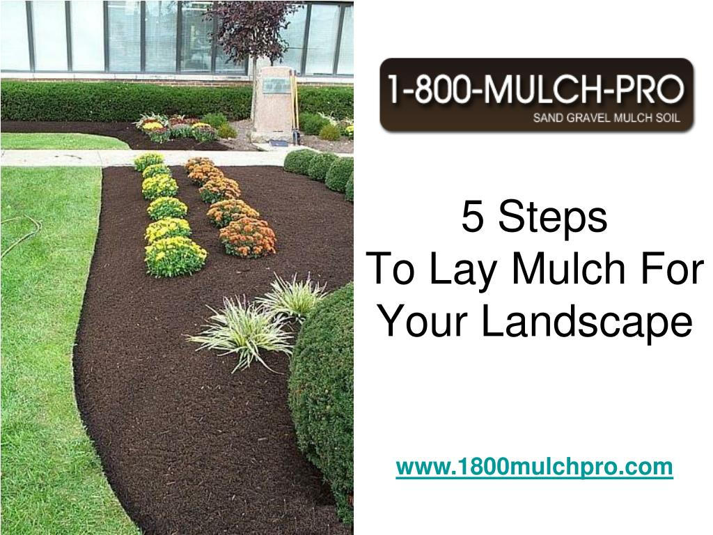 5 steps to lay mulch for your landscape l.