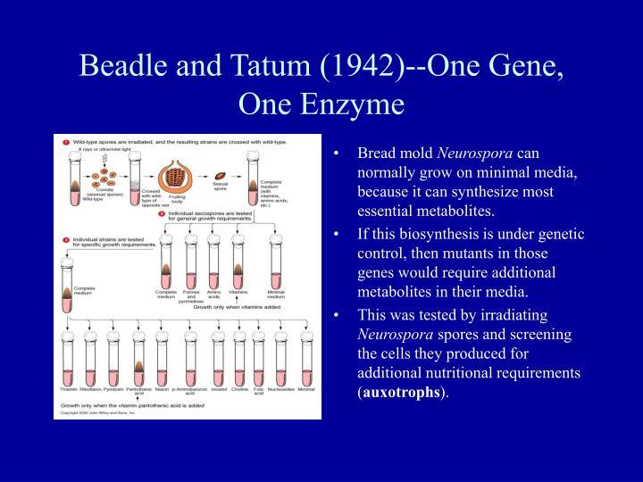 Beadle and Tatum (1942)--One Gene, One Enzyme