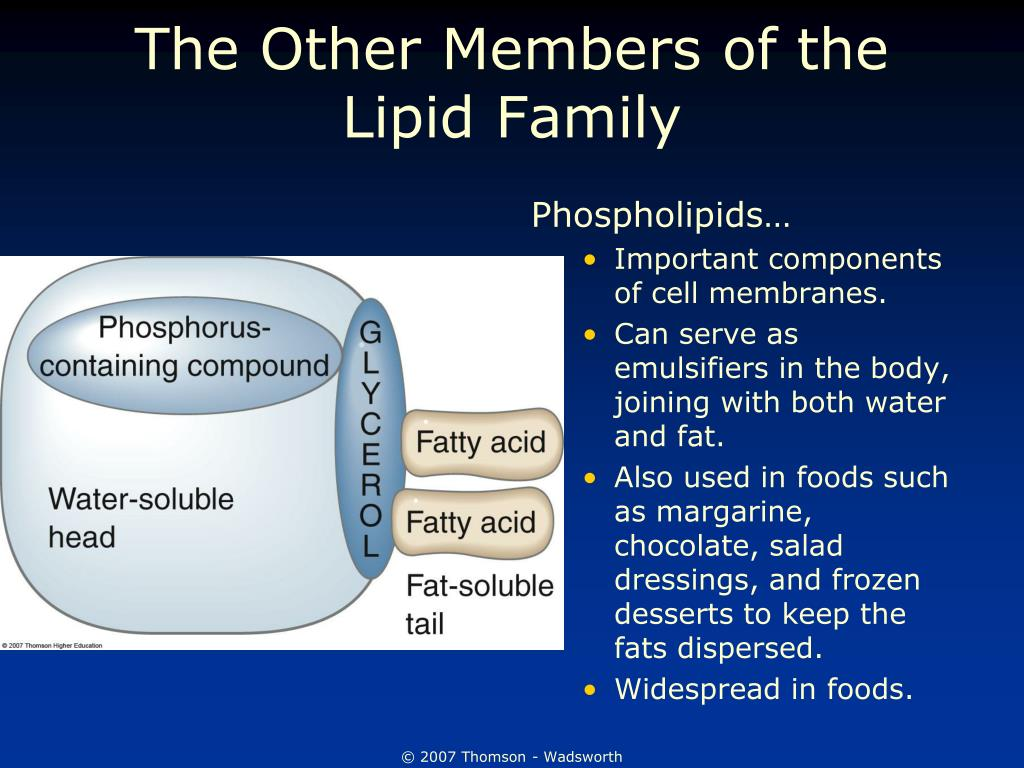 The Other Members of the Lipid Family