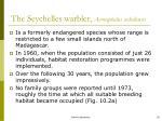 the seychelles warbler acrocephalus sechellensis