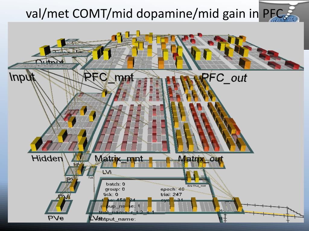 val/met COMT/mid dopamine/mid gain in PFC
