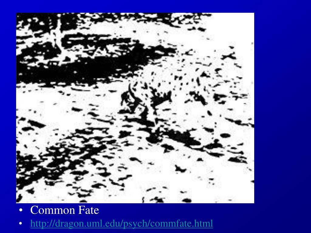 Common Fate