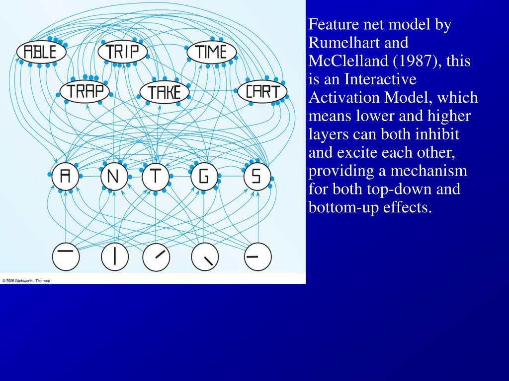 Feature net model by Rumelhart and McClelland (1987), this is an Interactive Activation Model, which means lower and higher layers can both inhibit and excite each other, providing a mechanism for both top-down and bottom-up effects.