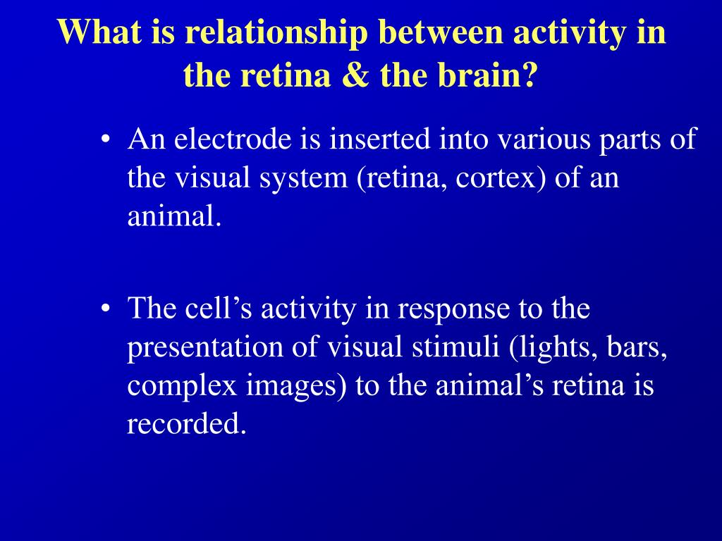 What is relationship between activity in the retina & the brain?