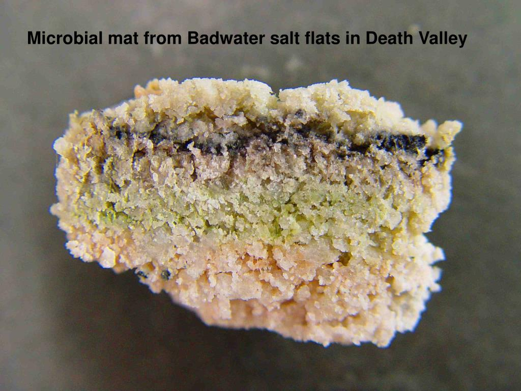 Microbial mat from Badwater salt flats in Death Valley