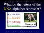 what do the letters of the dna alphabet represent