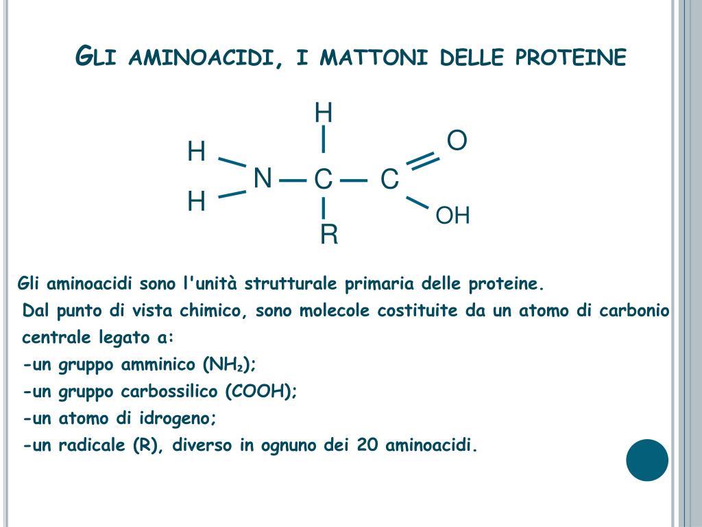 Gli aminoacidi, i mattoni delle proteine