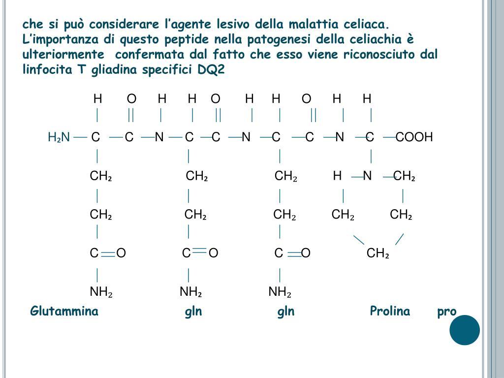 che si può considerare l'agente lesivo della malattia celiaca. L'importanza di questo peptide nella patogenesi della celiachia è ulteriormente  confermata dal fatto che esso viene riconosciuto dal linfocita T gliadina specifici DQ2