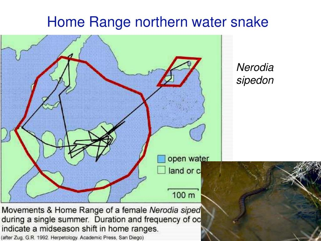 Home Range northern water snake