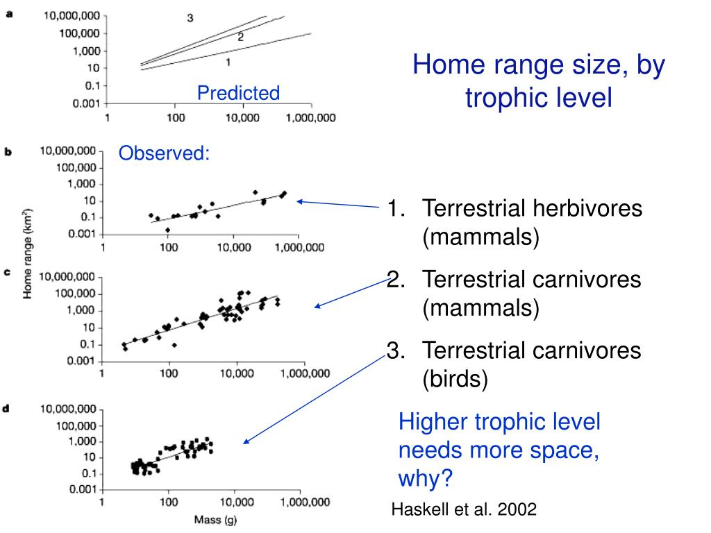 Home range size, by trophic level