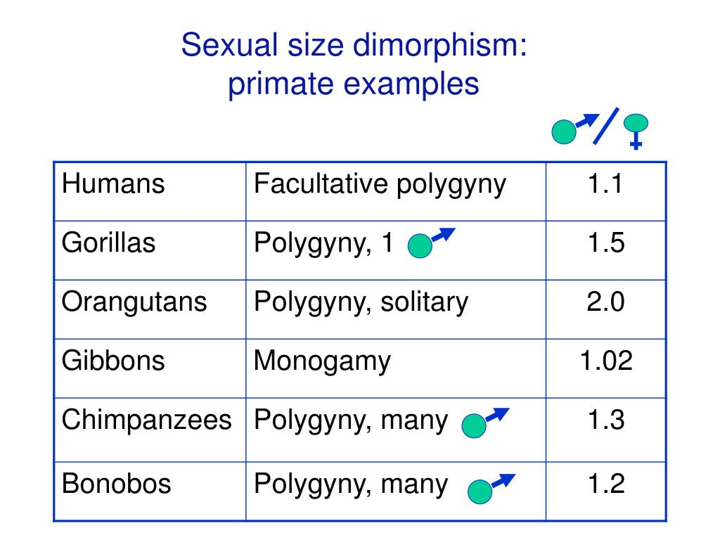 Sexual size dimorphism: