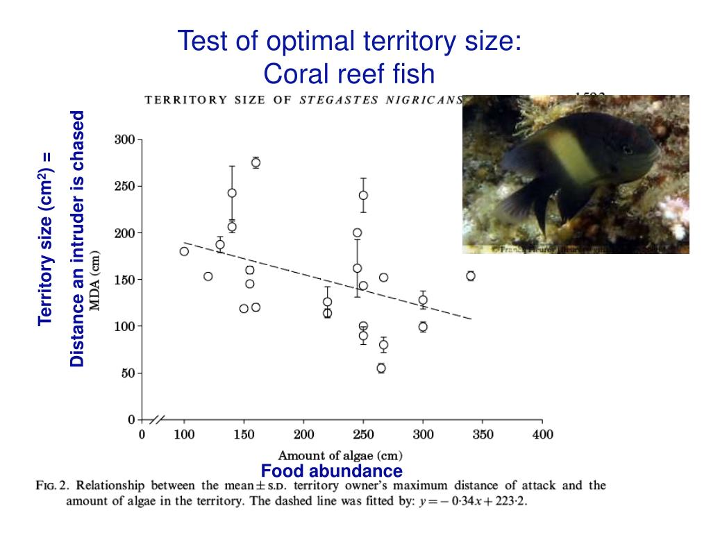Test of optimal territory size: