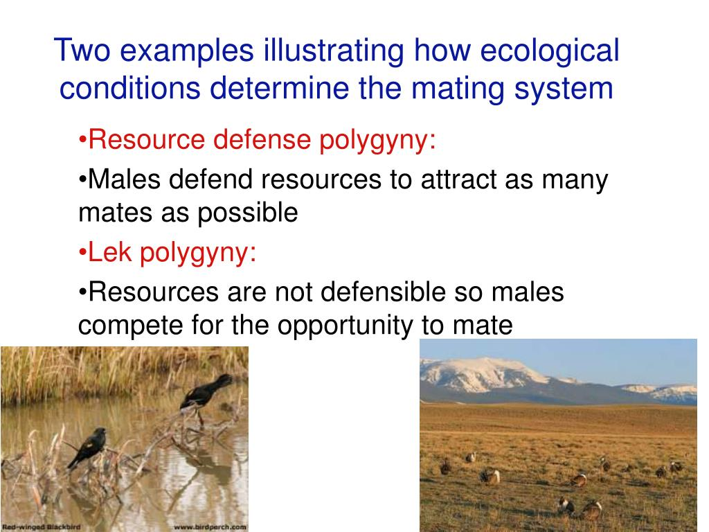 Two examples illustrating how ecological conditions determine the mating system