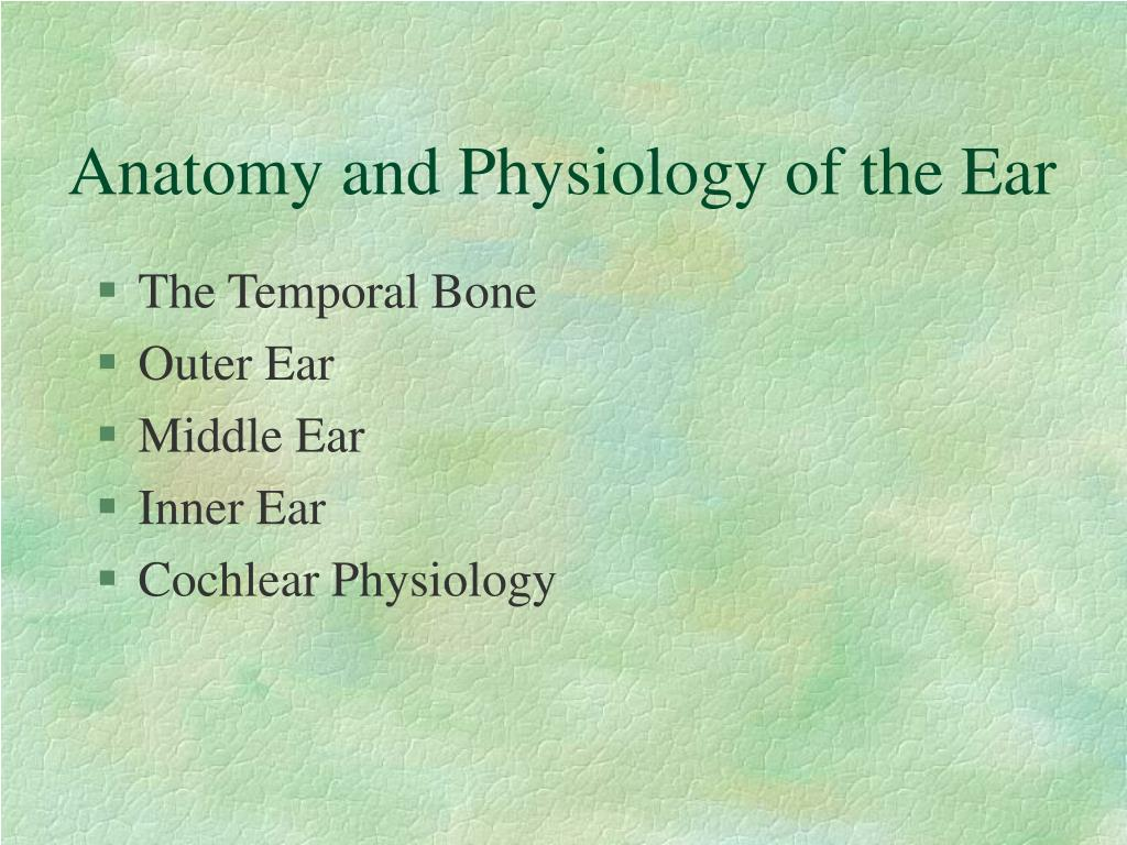 PPT - Anatomy and Physiology of the Ear PowerPoint Presentation - ID ...
