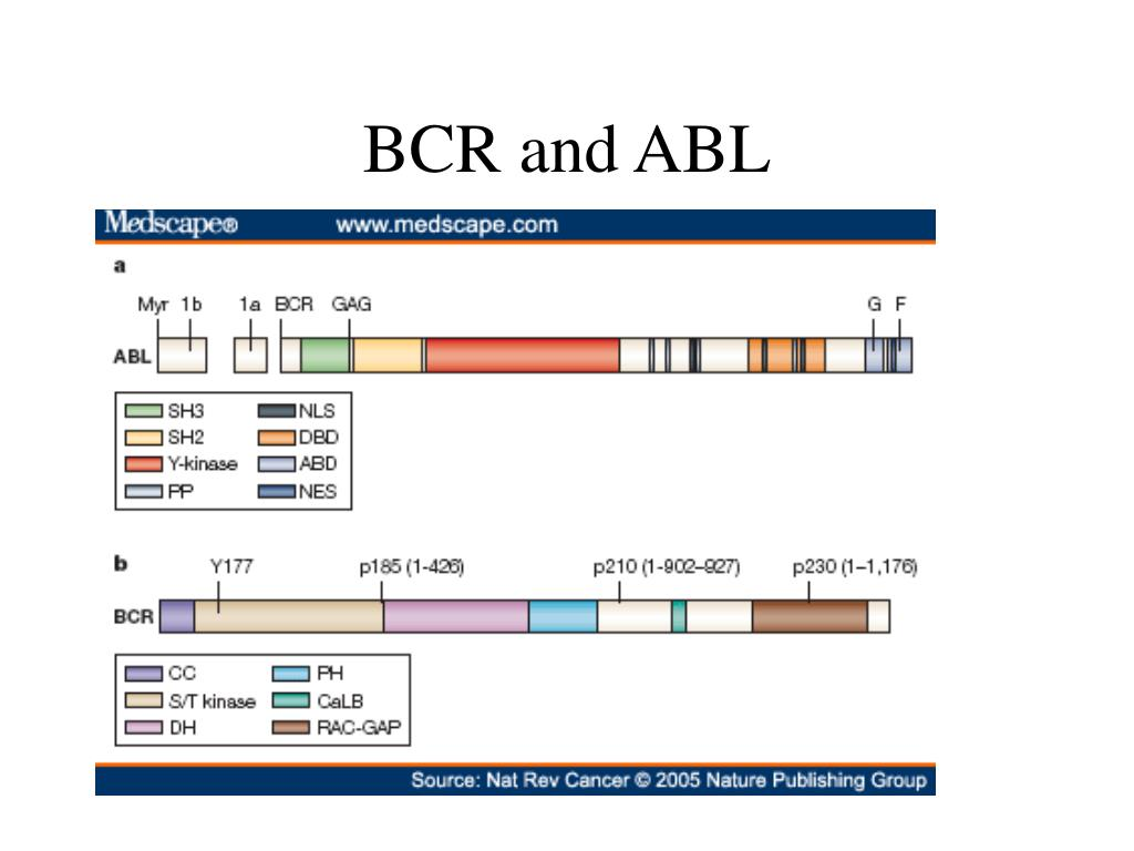 BCR and ABL