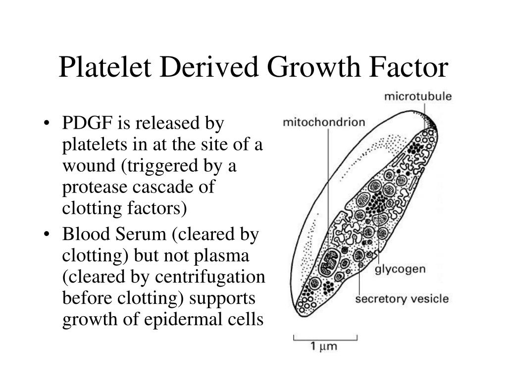 Platelet Derived Growth Factor
