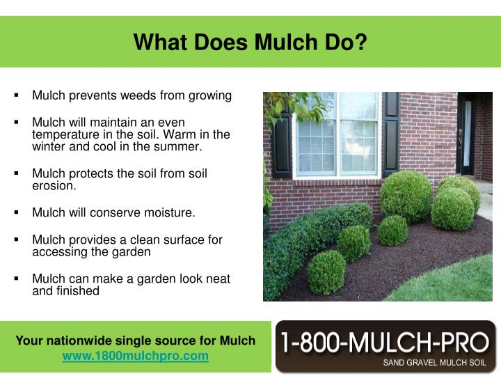 Mulch prevents weeds from growing