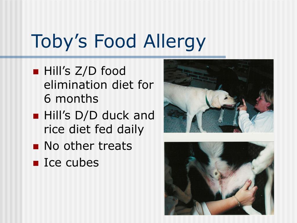 Toby's Food Allergy