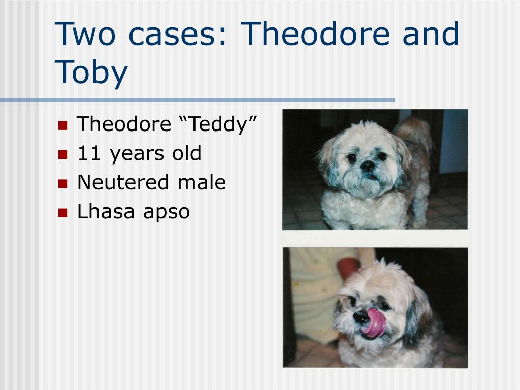 Two cases: Theodore and Toby