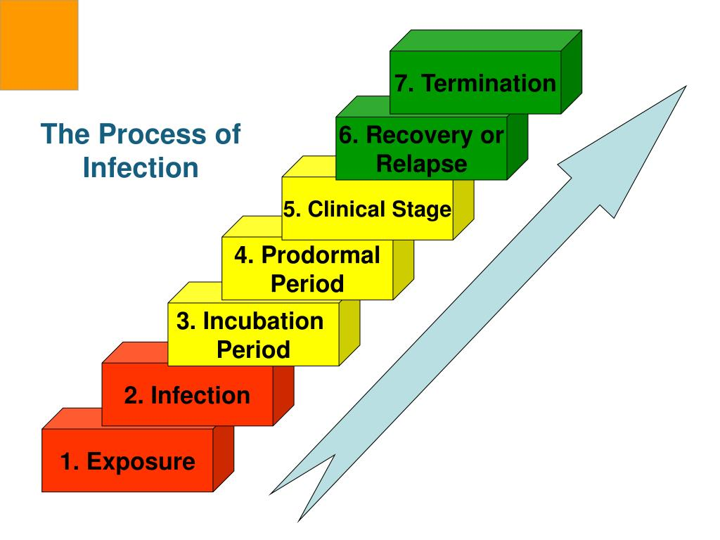 The Process of Infection