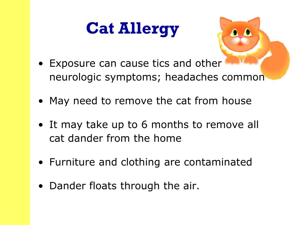 Cat Allergy