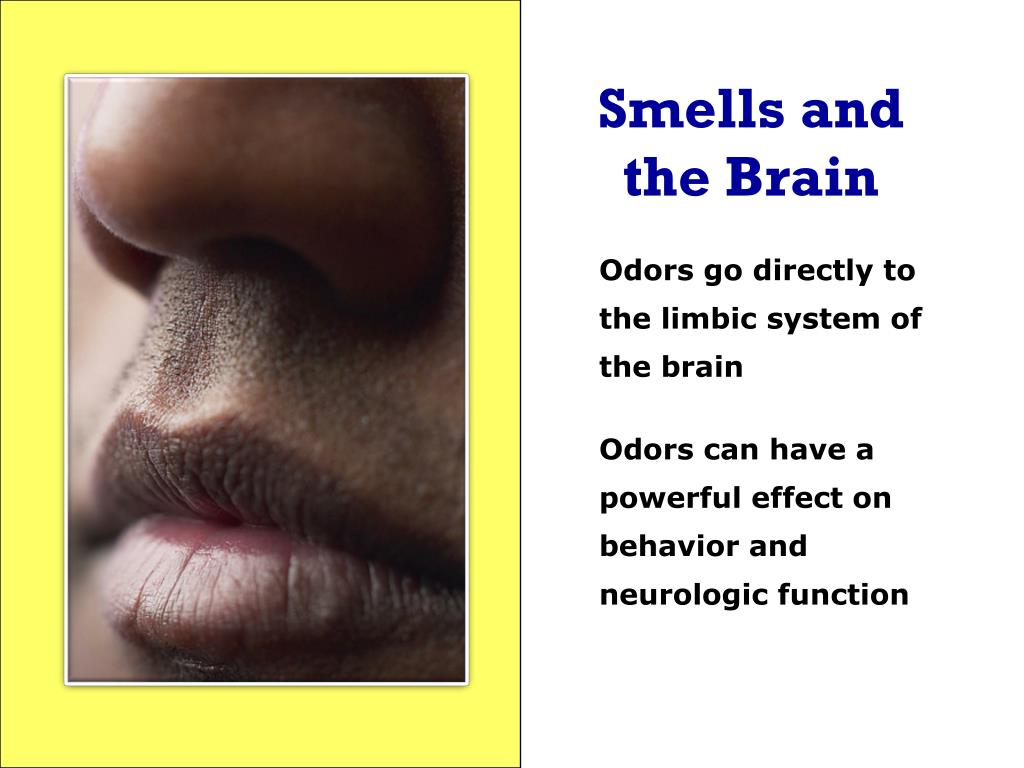 Smells and the Brain