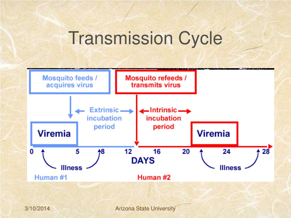 Transmission Cycle