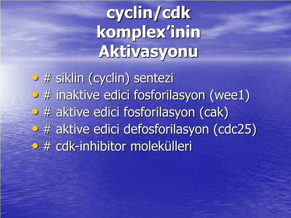 cyclin/cdk