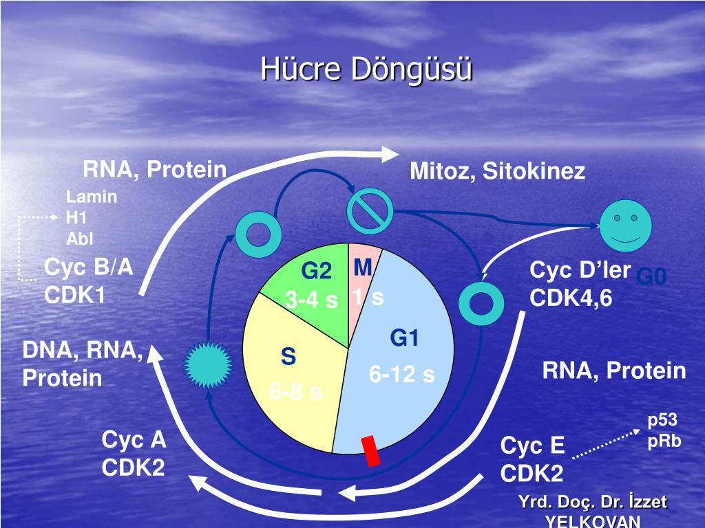 RNA, Protein