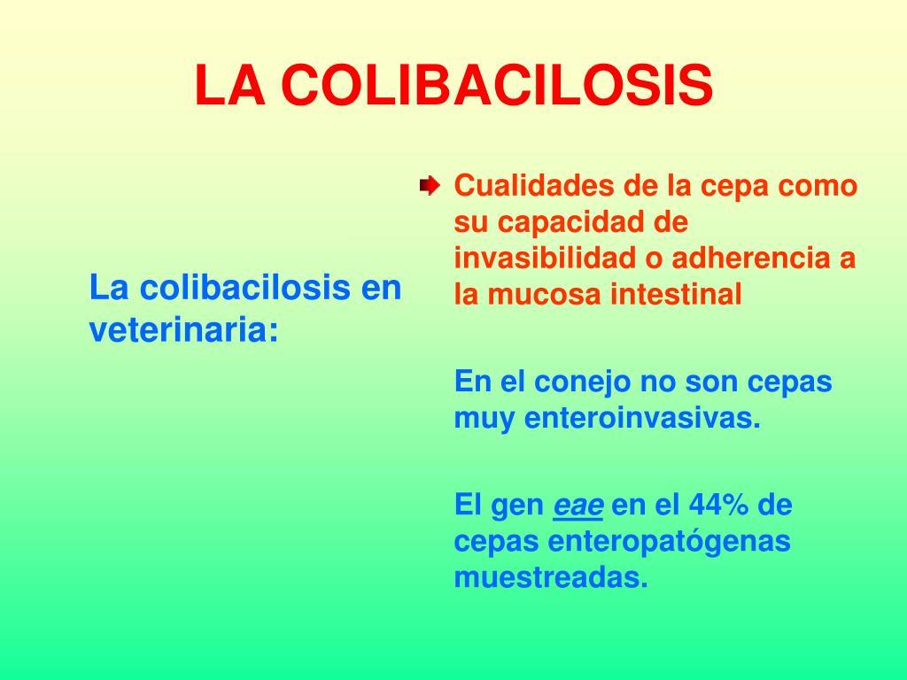 LA COLIBACILOSIS