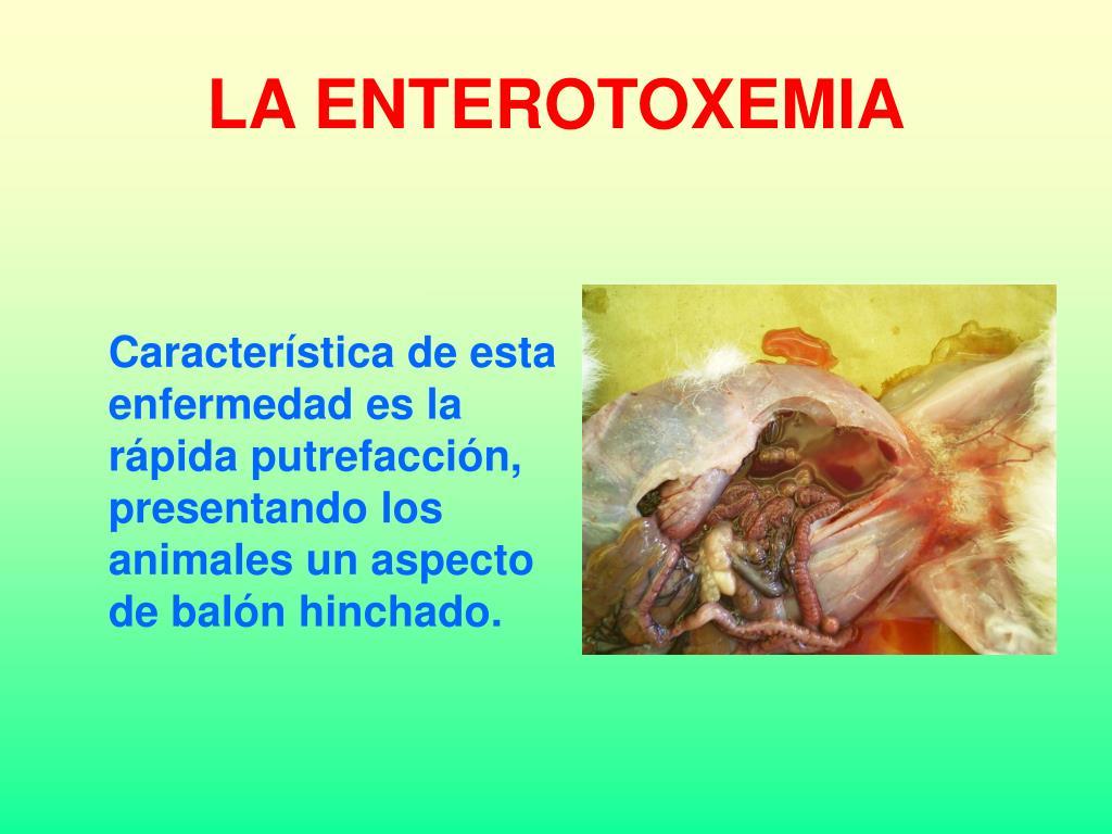 LA ENTEROTOXEMIA