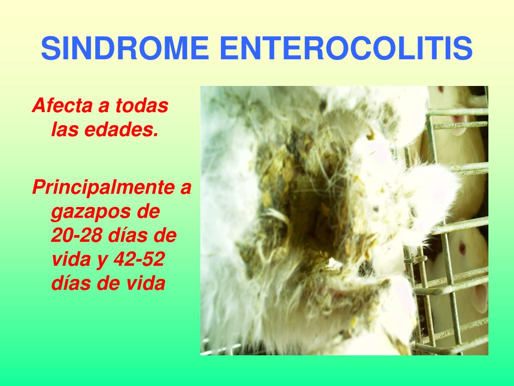 SINDROME ENTEROCOLITIS