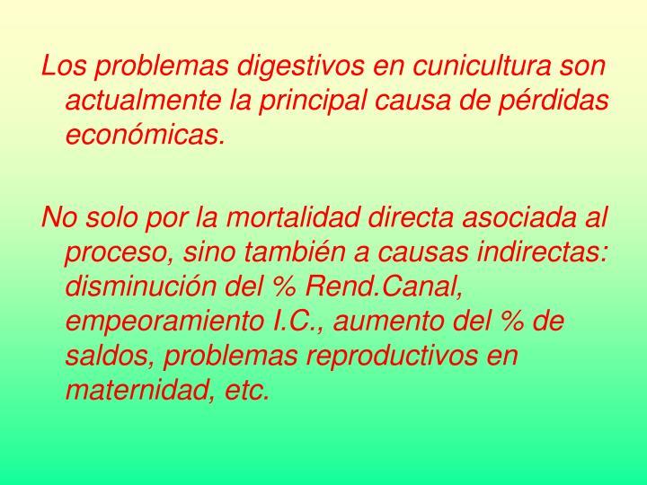 Los problemas digestivos en cunicultura son actualmente la principal causa de pérdidas económicas.