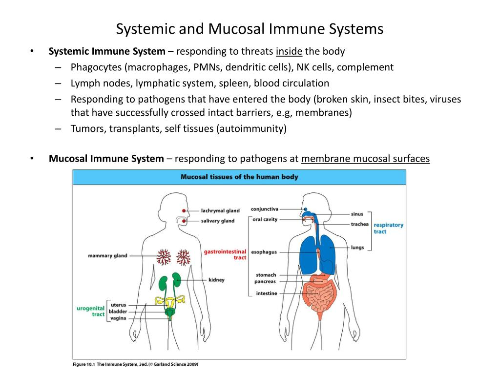 Systemic and Mucosal Immune Systems