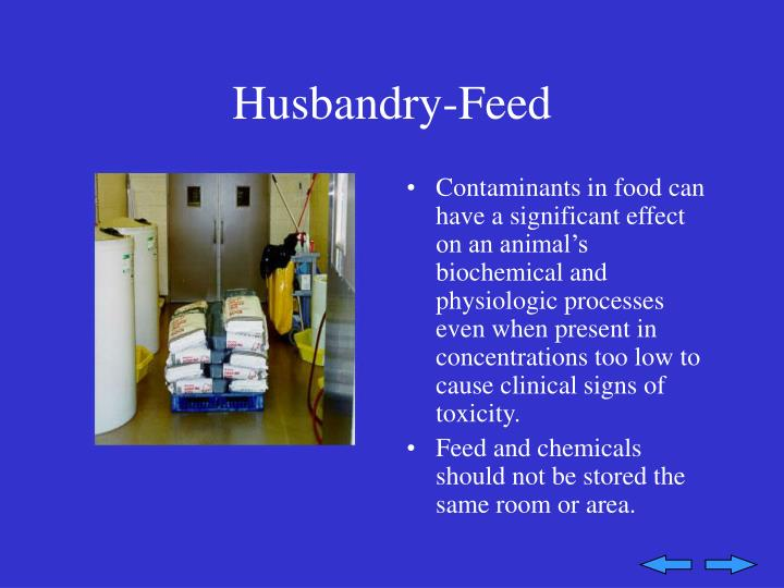 Husbandry-Feed