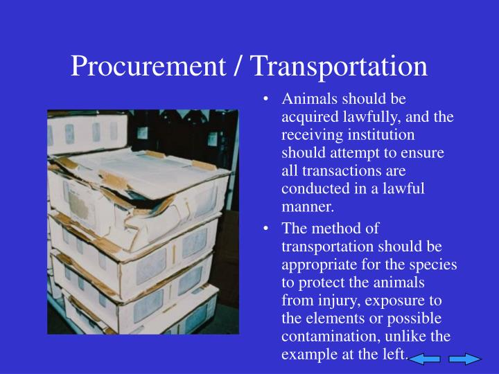 Procurement / Transportation