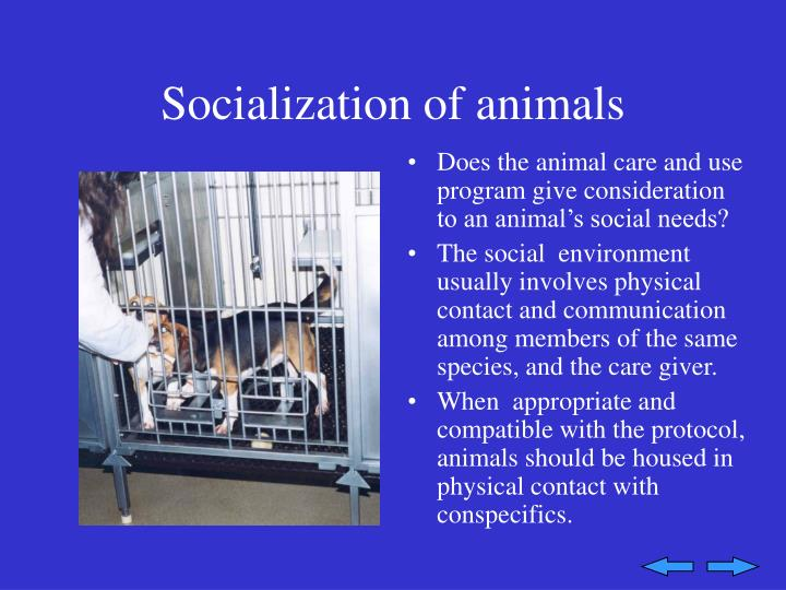 Socialization of animals