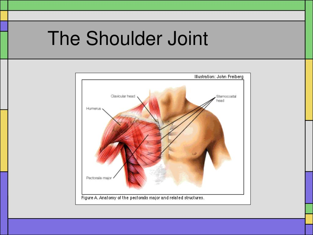 Ppt The Shoulder Joint Powerpoint Presentation Id631876