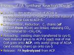 phases of fa synthase reaction cycle