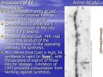 regulation of fa active acoac metabolism
