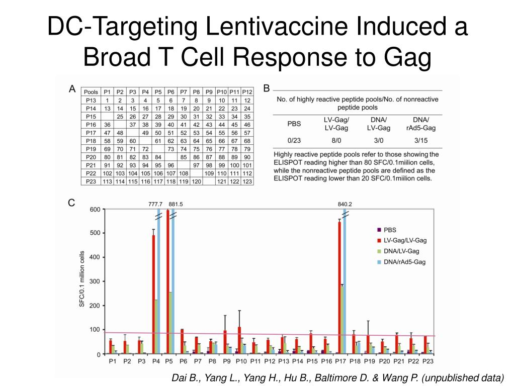 DC-Targeting Lentivaccine Induced a Broad T Cell Response to Gag