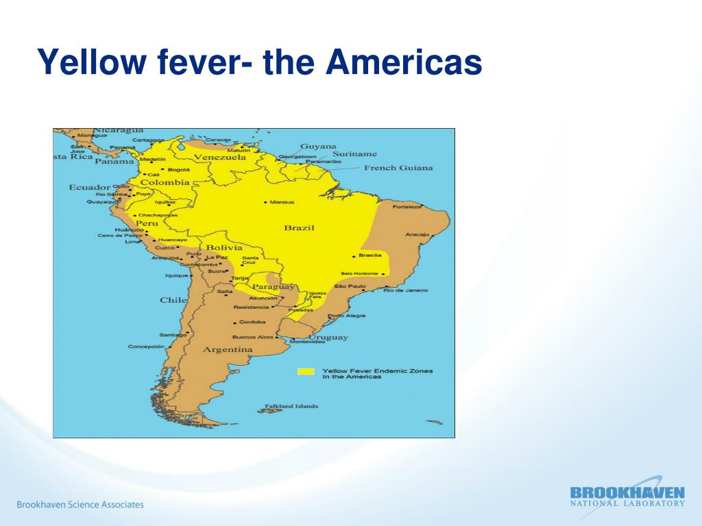 Yellow fever- the Americas