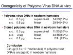 oncogenicity of polyoma virus dna in vivo