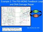 example 2 the p53 mdm2 feedback loop and dna damage repair