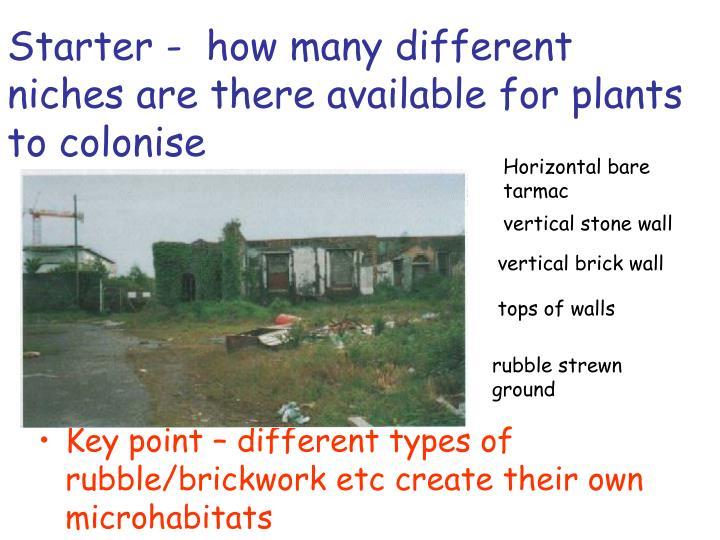 Ppt Definition Of Urban Niche Powerpoint Presentation