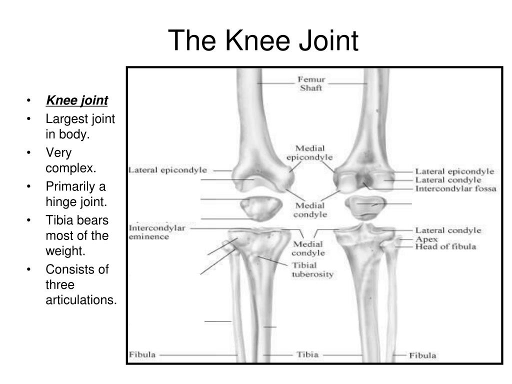 PPT - The Knee Joint PowerPoint Presentation - ID:634195