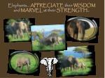 elephants appreciate their wisdom and marvel at their strength