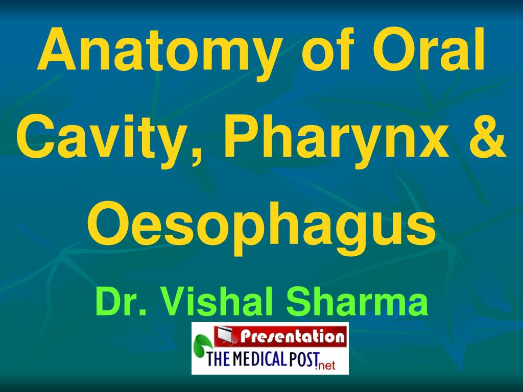 PPT - Anatomy of Oral Cavity, Pharynx & Oesophagus PowerPoint ...